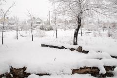 Snow day in spring