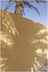 ras al khaimah 60 (beauty of all things) Tags: vae uae rasalkhaimah walls wände urbaneflora