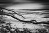baltic Sea Impression (www.streetphotography-berlin.com) Tags: baltic sea coast beach trees water waves stones beautiful atmospheric seascape landscape blackandwhite blackwhite monochrome nature fine art