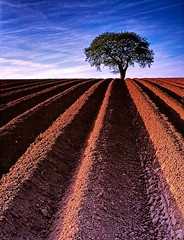 Groovy Tree (nerd.bird) Tags: tree landscape field ploughed soil sky clouds patterns lines red blue