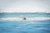 Seal View (Clint Everett) Tags: nature iceland seal wildlife animal glacier jökulsárlón vatnajökull curious winter water lagoon