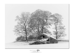 Barn (shaun.argent) Tags: woodland woods trees tree winter weather seasons shaunargent snow snowfall easter flora nature yorkshire