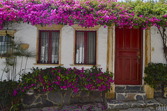 Puertas y Ventanas (Tato Avila) Tags: colombia colores cálido campo casas boyacá pueblitoboyacense ventana puerta windows door vida vegetal flor naturaleza nikon