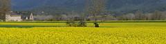 SANT GREGORI - CASTELL DELS MARGARIT (Joan Biarnés) Tags: santgregori gironès catalunya paisatge paisaje groc amarillo panasonicfz1000 castelldelsmargarit esglesia iglesia