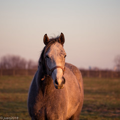 Horses of Kentucky (JuanJ) Tags: nikon d850 lightroom art bokeh nature lens light landscape white green red black pink sky people portrait location architecture building city iphone iphoneography square squareformat instagramapp shot awesome supershot beauty cute new flickr amazing photo photograph fav favorite favs picture me explore interestingness wedding party family travel friend friends vacation beach horse kentucky lexington fayette county 2018 march bluegrass farm grass thoroughbred