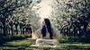 Praying (Frank Siebach) Tags: praying apple blossom hippie nature tree fuji xt2 xf56 woodstock