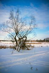 01 - [Precisa100] (stepanov9) Tags: minoltadimagescanelite540 nikonf80 solnechnogorskdistrictnearmoscow tree water lake landscape