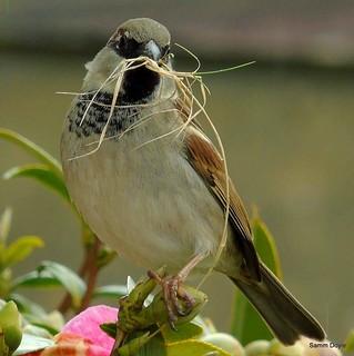 Gathering for nesting