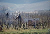 The work of the vineyard in winter (Chemose) Tags: bourgogne burgundy southburgundy bourgognedusud fuissé mâconnais vigne vineyard vine work france sony ilce7m2 alpha7ii février february winter hiver