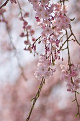 DSC01364 (Kotaro_Nakagawa) Tags: sony ilce6000 mhexanon90mmf28 flower blossom