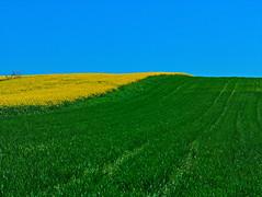 Microsoft Windows... (Photo_hobbyist) Tags: green yellow blue grass serres greece macedonia makedonia countryside macedoniagreece timeless macedonian macédoine mazedonien μακεδονια македонија
