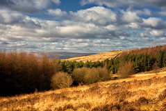 Crompton Moor (Missy Jussy) Tags: cromptonmoor moors pineforest forest trees sky clouds windfarm village shaw northwest moorland grass sunlight oldham landscape lancashire lane walkinglandscape countryside dogwalk view canon canon5dmarkll 50mm ef50mmf18ll ef50mm canon50mm fantastic50mm fixedfocallength primelens