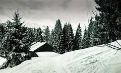 Combloux lomography turquoise 02 2018018 (Patrick.Raymond (4M views)) Tags: alpes montagne haute savoie combloux la cry neigne froid gel hiver nikon argentique lomography turquoise