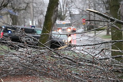 308/365/3595 (April 15, 2018) - Downed Tree on Henry Street During an Ice Storm (Saline, Michigan - April 15, 2018)