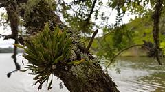 Parque Passaúna (clodo.lima) Tags: arvores lago parque parquepassauna passauna curitiba cwb plantas natureza nature three epifitas