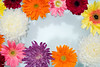 Closeup of colorful flowers floating on water background (rawpixel.com) Tags: africandaisy attractive background bath beautiful beauty bloom blossom botanical botany chrysanthemum closeup collection colorful daisy decoration drop elegance floating flora floral flower flowery fresh garden gerbera gerberadaisy isolated life macro name natural nature pamper pattern petal plant romantic spa spring summer surface texture textured transvaaldaisy wallpaper water wet whitechrysanthemum whitemum zen