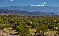 A Late Morning View Across the Chihuahuan Desert to Peaks of the Sierra del Carmen (Big Bend National Park)
