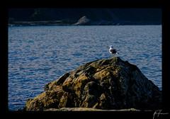 2018-04-22_Kaikoura_weekend_021.jpg (Rojobin) Tags: type beach kaikoura portraits landscapes seals animals nz newzealand places