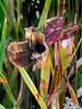 Afterbloom (bethrosengard) Tags: bethrosengard photomanipulation digitallyenhanced photoart digitalmagic digitalart