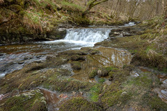 woodland river (mak_9000) Tags: