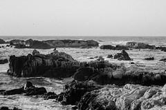 "Thinking on Asilomar Rocks (craig.rohn) Tags: asilomar ""asilomarstatebeach"" ""pacificgrove"" pacific california ""montereypeninsula"