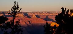 Grand Canyon-14 (amylippman1) Tags: 2016 canyon grandcanyon southrim southwest