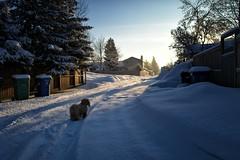 L1030931 copy (geelog) Tags: dog sunrise leicaq winter alley fence dawn