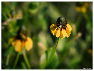 Bug on Mexican Hat