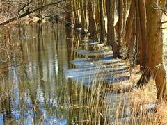 die Ufer der Schaale (Sophia-Fatima) Tags: zarrentin mecklenburgvorpommern deutschland naturschutzgebietschaalelauf schaale biosphärenreservatschaalsee