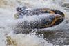 D4S_3002 (Chris Worrall) Tags: 0817142 2018 action chrisworrall competition competitor copyrightchrisworrall dramatic exciting geotagn51551708e0817412 photographychrisworrall playboat postcodesl72eb power speed sport watersport aeroplane canoe cold freestyle hurley hurleyclassic hurleyweir kayak theenglishcraftsman worrall