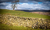 5th April 2018 (Rob Sutherland) Tags: mountainbike full suspension offroad cycling bike mtb ride wall drystone tree field farm farmland farming agriculture agricultural lakeland lakes lakedistrict ldnp nationalpark worldheritage outdoor active activity bound fit fitness health healthy cumbria cumbrian england english britain british uk spring cyclist rider 29er landscape rocky rough terrain all