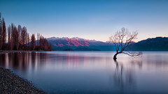 What a Wanaka (Pat Charles) Tags: wanaka newzealand nz southisland queenstown winter alps southernalps lake travel tourism longexposure tripod reflection reflected reflections mountaspiring cardrona lakewanaka tree raptor bird nest trees snow ski skiing alpine downhill