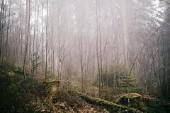 Welcome To My Dreamland (desomnis) Tags: forest trees nature landscapephotography landscape landschaft landscapes natur woodland woods desomnis canon5dmarkiv canon 5d mark iv canon5d markiv sigma35mmart sigma35mmf14 sigma35mmf14art 35mm sigma austria österreich oberösterreich upperaustria mühlviertel böhmerwald bohemianforest