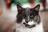 Zeus (Nicolás Letelier V.) Tags: canon t3 eos rebel 50mm 18 gatos animales mascotas cat zeus nicolas letelier fotografia