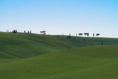 Val d Orcia (bill.dottore) Tags: valdorcia tuscany d810 70200