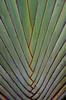 Sandi Agung Palm (itchypaws) Tags: northkuta bali indonesia id sandi agung villa villas palm tree seminyak asia