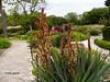 Balchik botanical garden, Bulgaria (cod_gabriel) Tags: bulgaria balchik balcic botanicalgarden balchikbotanicalgarden cadrilater dobrogea dobruja dobrudja panseluţe flowers flori