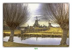 De ZAANSE SCHANS (régisa) Tags: molen moulin zaanse schans zaandam nederland netherlands paysbas hollande arbre zaan zaandijk