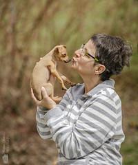 Un amour d'Orféo. (Philippe Bélaz) Tags: orféo pragois ratierdeprague tamara animal animaux animauxdecompagnie chien chiots famille portraitsanimalier printemps