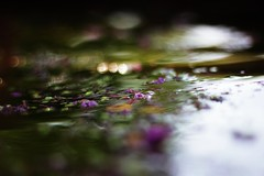 """""""I want eternity..."""" (Therese Trinko) Tags: pond reflections flowers bokeh abstract"""