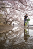 CHERRY BLOSSOMS AT THE TIDAL BASIN, DC (A B Pan) Tags: cherryblossoms washingtondc nationalmall tidalbasin puddles reflection earlymorning spring sunnyday limebike candid friends
