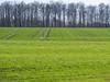 Green fields (schauplatz) Tags: acker bäume feld frühling kulturlandschaft landschaft wiese field landscape spring sun trees