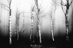 Winter's tales (Mimadeo) Tags: forest fog trees tree foggy misty mist trunk trunks landscape light mystery mysterious ethereal gloomy black white blackandwhite lichen spooky bare winter