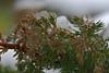Münster 20171209 05 (Dirk Buse) Tags: münster nordrheinwestfalen deutschland deu schnee kalt kälte germany de natur zweig nature outdoor grün mft m43