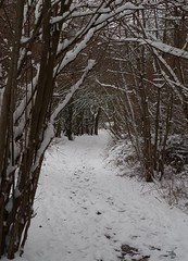 2018 march 18 snow sheffield shirebrook valley  (22) (Simon Dell Photography) Tags: tree tunnel path walk shirebrook valley park snow uk sheffield hackenthorpe s12 simon dell photography 2018 minibeastfromtheeast weather nature wildlife birds narnia winter wonderland spring march 18th