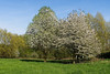 Monheim - Landschaft am Rheindamm III (KL57Foto) Tags: 2018 april frühling germany kl57foto monheim monheimamrhein nrw natur nordrheinwestfalen olympus penemp2 baum bäume trees