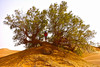 Una sombra en el desierto (KRAMEN) Tags: desierto sáhara arena