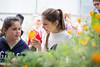 Sustainability_STORC_EPIC_20180417_0288 (Sacramento State) Tags: universitycommunications sacramentostate californiastateuniversitysacramento sacstate sustainability storc campus tour garden flower aquaponics greenhouse kids