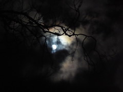 A Scottish Moonlight.. (Julie Rutherford1 ( off/on )) Tags: moon light moonlight tree branches scotland julie rutherford lismore island clouds full