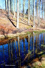 Muziekbos (Fabrice H. - Photography) Tags: muziekbos bos wood woods tree boom water sky nature canon ronse vlaamseardennen vlaanderen oostvlaanderen belgium